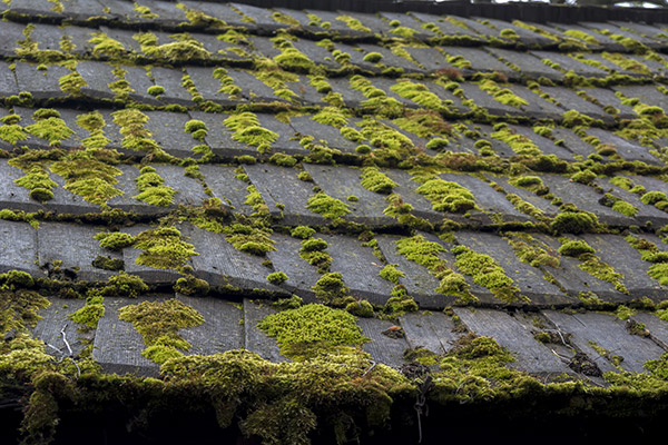 algae growth on asphalt roof